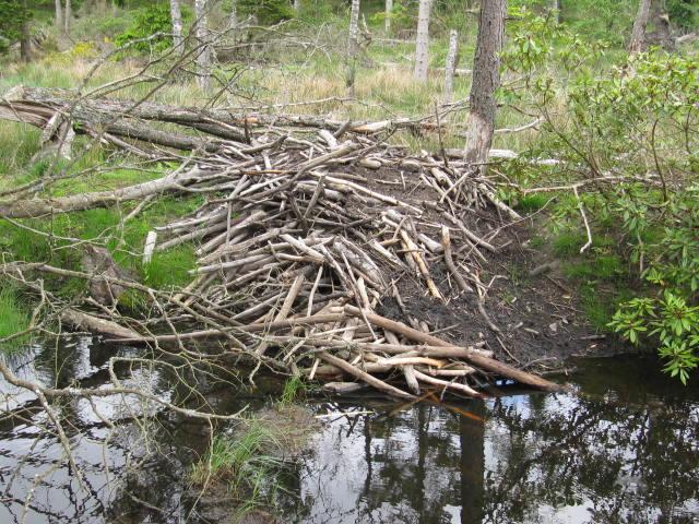 lodge on pond